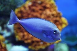 fish-800345_960_720%5B1%5D.jpg