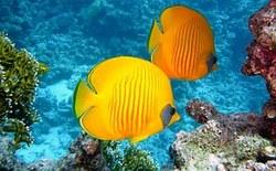 zitronenfalter-fish-380037__180%5B1%5D.jpg